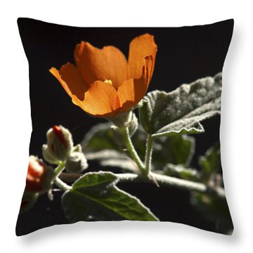 Sphaeralcea Ambigua Throw Pillow by Joe Schofield