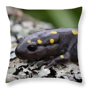 Spotted Salamander Throw Pillow by Bruce J Robinson