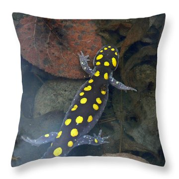 Spotted Salamander Throw Pillow by Christina Rollo