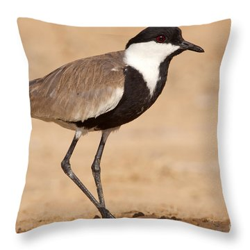 Spur-winged Lapwing Vanellus Spinosus Throw Pillow by Eyal Bartov
