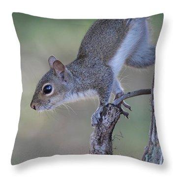 Squirrel Pose Throw Pillow by Deborah Benoit