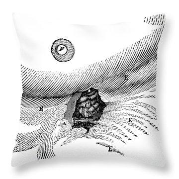St. Martins Fistula Throw Pillow by Granger