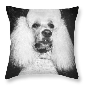 Standard Poodle Throw Pillow by ME Browning