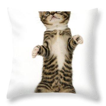 Standing Cat Ck305 Throw Pillow by Greg Cuddiford