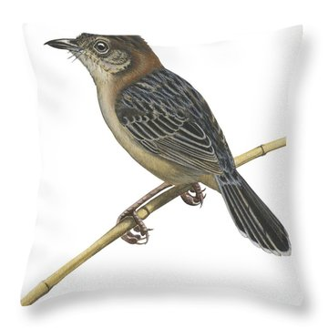 Stout Cisticola Throw Pillow by Anonymous