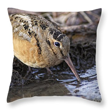 Streamside Woodcock Throw Pillow by Timothy Flanigan