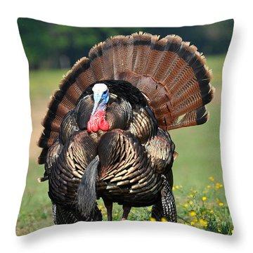 Strutting Gobbler Throw Pillow by Todd Hostetter