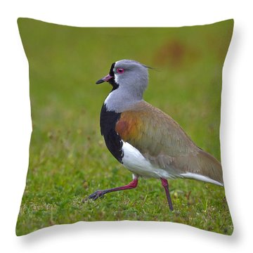 Strutting Lapwing Throw Pillow by Tony Beck