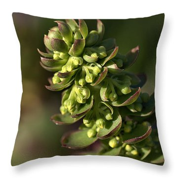 Succulent Throw Pillow by Joy Watson
