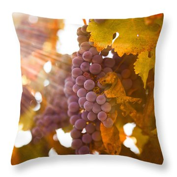 Sun Ripened Grapes Throw Pillow by Diane Diederich