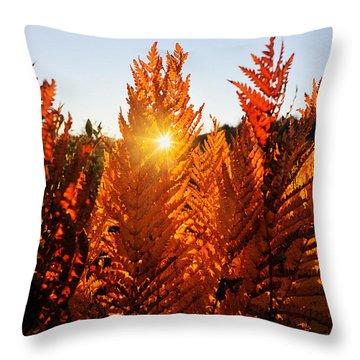 Sun Shining Through Fern Throw Pillow by Dan Friend