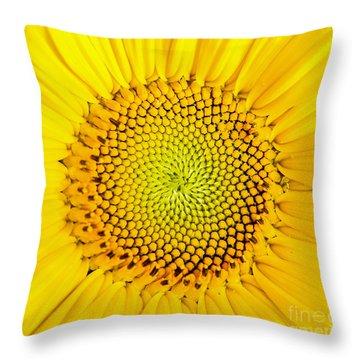 Sunflower  Throw Pillow by Edward Fielding