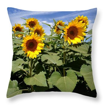 Sunflower Field Throw Pillow by Kerri Mortenson
