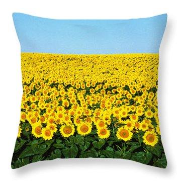 Sunflower Field, North Dakota, Usa Throw Pillow by Panoramic Images