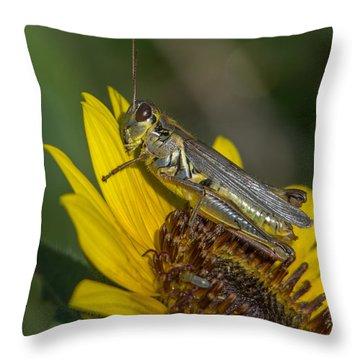 Sunflower Love Throw Pillow by Ernie Echols