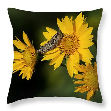 Sunny Hopper Throw Pillow by Ernie Echols