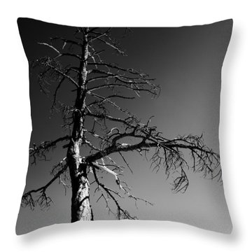Survival Tree Throw Pillow by Chad Dutson