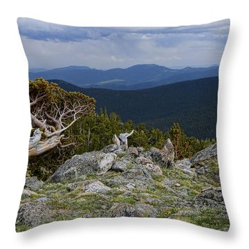 Survivor Throw Pillow by Gary Holmes
