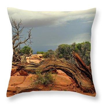 Survivor Throw Pillow by Marty Koch