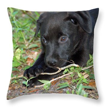 Sweet Puppy Throw Pillow by Aimee L Maher Photography and Art Visit ALMGallerydotcom