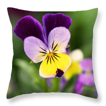 Sweet Violet Throw Pillow by Rona Black