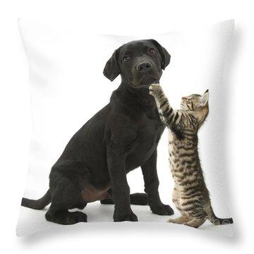 Tabby Male Kitten & Black Labrador Throw Pillow by Mark Taylor