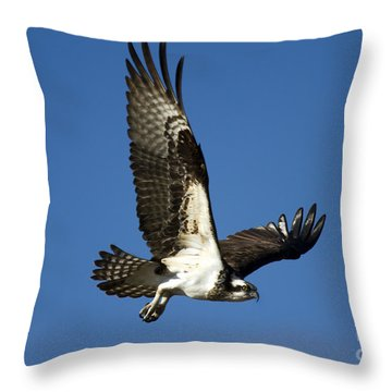 Take Flight Throw Pillow by Mike  Dawson