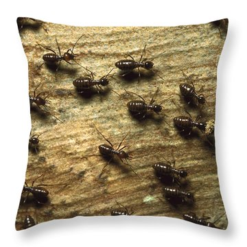 Termites On Wood With One Carrying Throw Pillow by Konrad Wothe