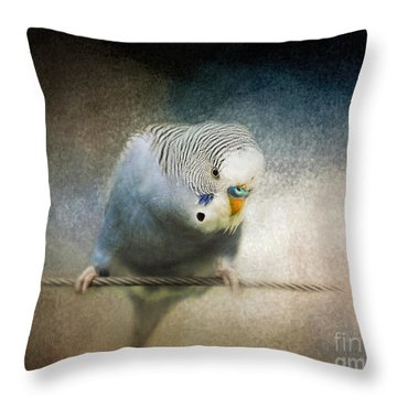 The Budgie Collection - Budgie 3 Throw Pillow by Jai Johnson