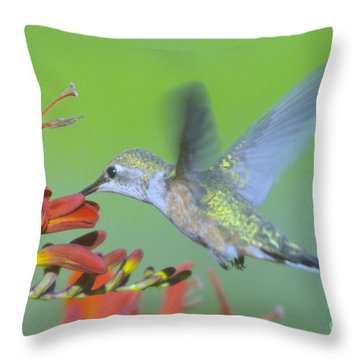 The Humming Bird Sips  Throw Pillow by Jeff Swan