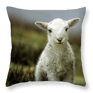 The Lamb Throw Pillow by Angel  Tarantella