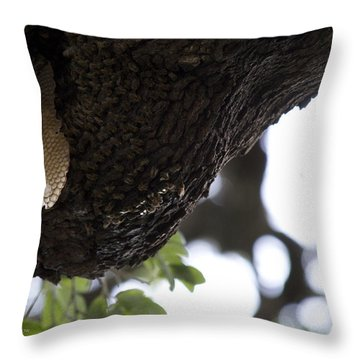 The Live Oak Throw Pillow by Shawn Marlow