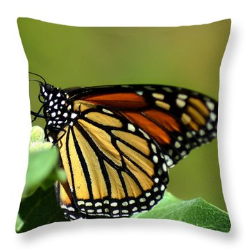 The Monarch Throw Pillow by Camille Lopez