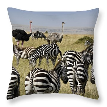 The Odd Couple Throw Pillow by Michele Burgess