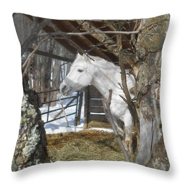 The Paso Fino Stallion At Home Throw Pillow by Patricia Keller