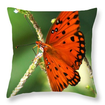 The Passion Butterfly Throw Pillow by Kim Pate