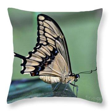 Thoas Swallowtail Butterfly Throw Pillow by Heiko Koehrer-Wagner