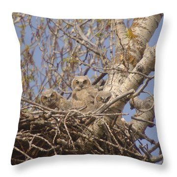 Three Baby Owls  Throw Pillow by Jeff Swan