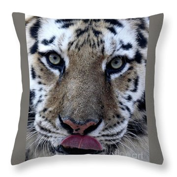 Tiger Lick Throw Pillow by Karol Livote
