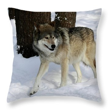 Timber Wolf In A Winter Snow Storm Throw Pillow by Inspired Nature Photography Fine Art Photography