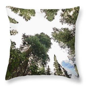 Towering Pine Trees Throw Pillow by James BO  Insogna