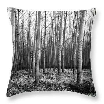 Tree Farm Throw Pillow by Chalet Roome-Rigdon