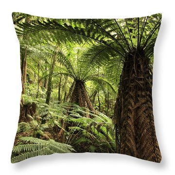 Tree Ferns Throw Pillow by Les Cunliffe