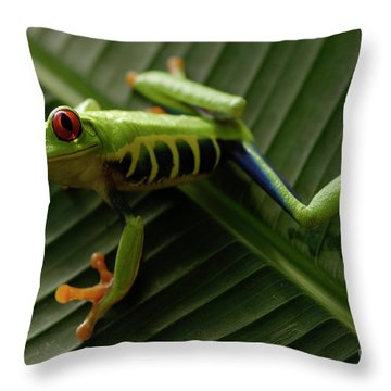 Tree Frog 16 Throw Pillow by Bob Christopher