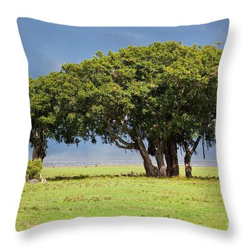Tree On Savannah. Ngorongoro In Tanzania Throw Pillow by Michal Bednarek