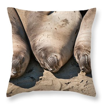 Trio Of Sleeping Northern Elephant Seals Mirounga Angustirostris At The Piedras Blancas Beach Throw Pillow by Jamie Pham