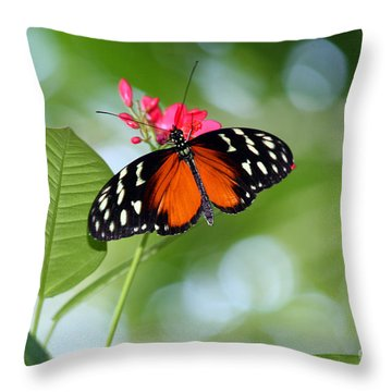 Tropical Hecale Butterfly Throw Pillow by Karen Adams