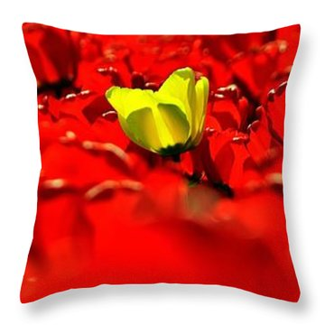 True Color Panorama Throw Pillow by Benjamin Yeager