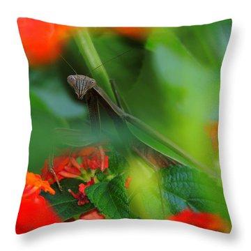Trying To Hide Praying Mantis Throw Pillow by Raymond Salani III
