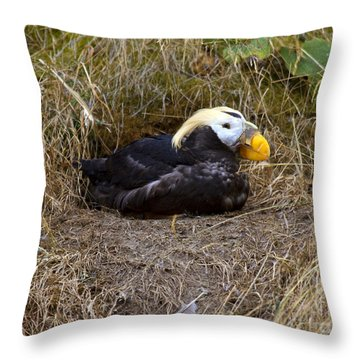 Tufted Puffin Throw Pillow by Mike  Dawson